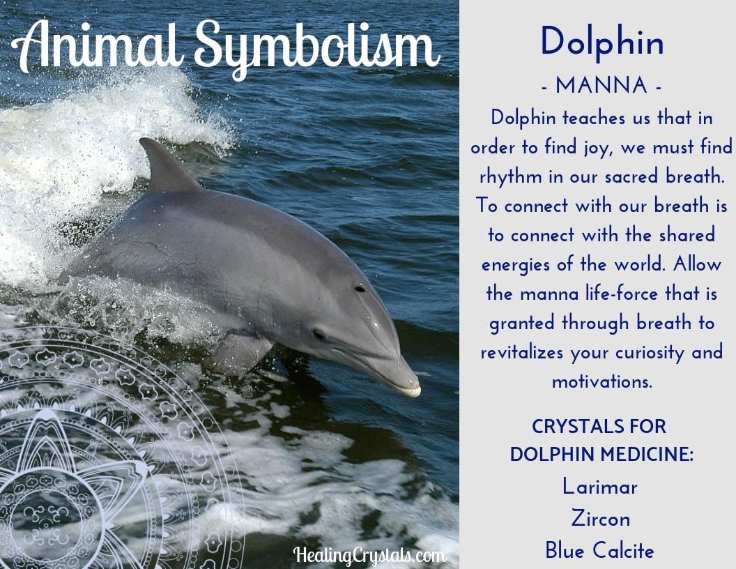 Animal Totems - Animal Medicine Dolphin