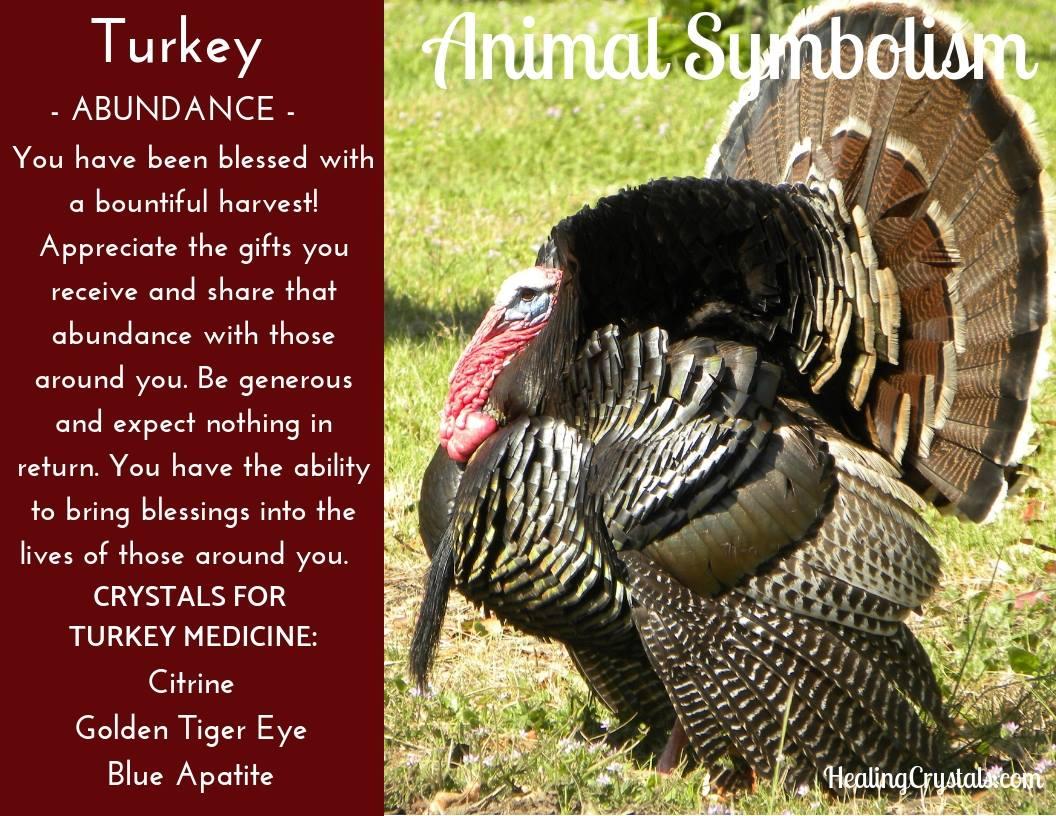 Animal Totems - Animal Medicine Turkey