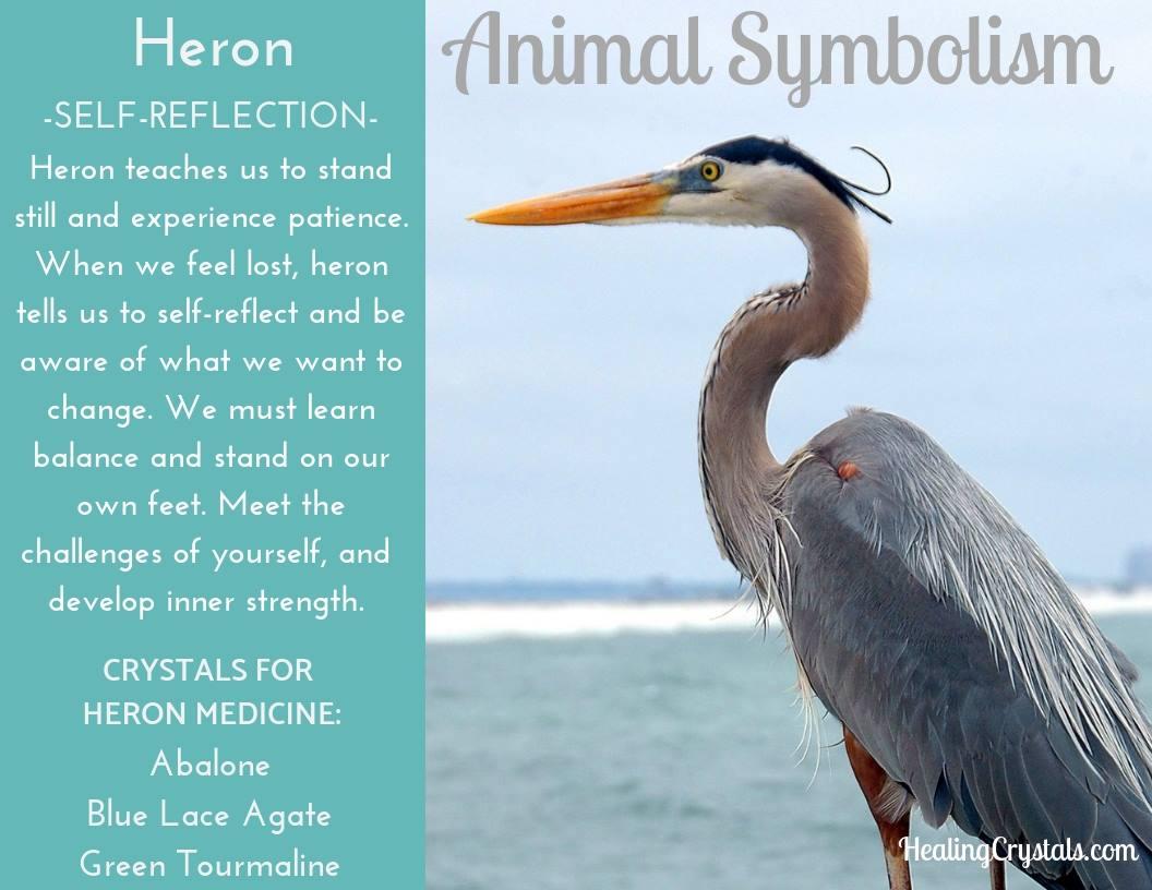Animal Symbolism & Animal Totem Meanings for Heron