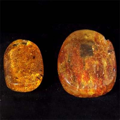 "Discontinued - Copal Amber Cabochon w/Bugs ""Free-Form"""