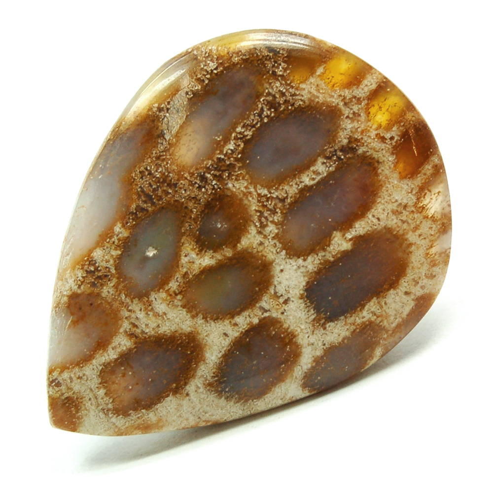 Discontinued - Agatized Coral Cabochon (India)