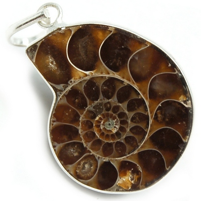 Pendants - Ammonite Pendant (India)