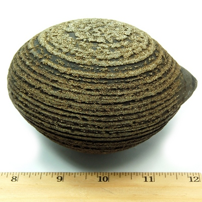 Discontinued - Pyrite Natural Concretion (China)