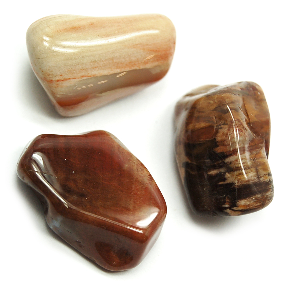 Tumbled Petrified Wood