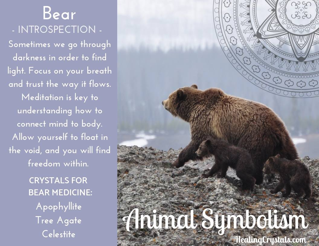 Animal Symbolism & Animal Totem Meanings for Bear