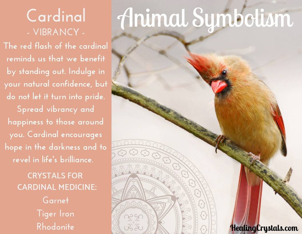 Animal Symbolism & Animal Totem Meanings for Cardinal