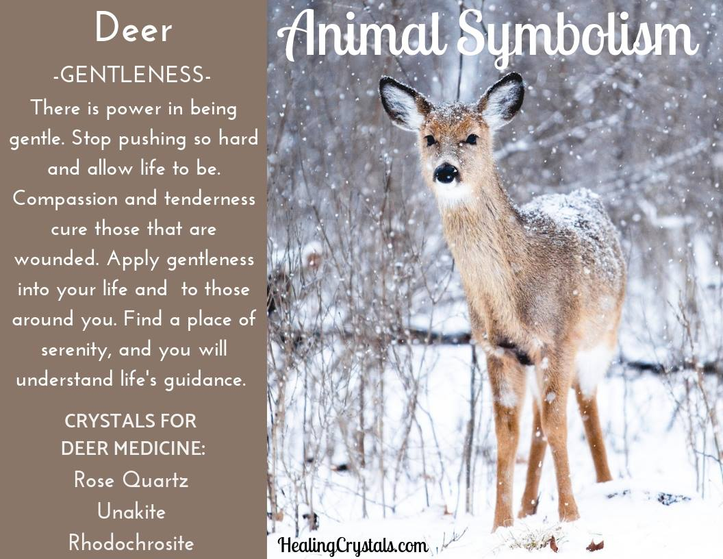 Animal Symbolism & Animal Totem Meanings for Deer