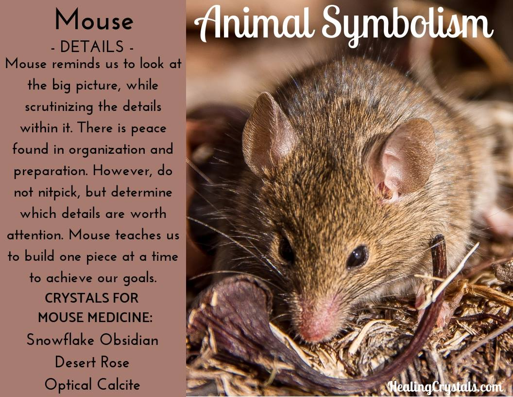Animal Symbolism & Animal Totem Meanings for Mouse