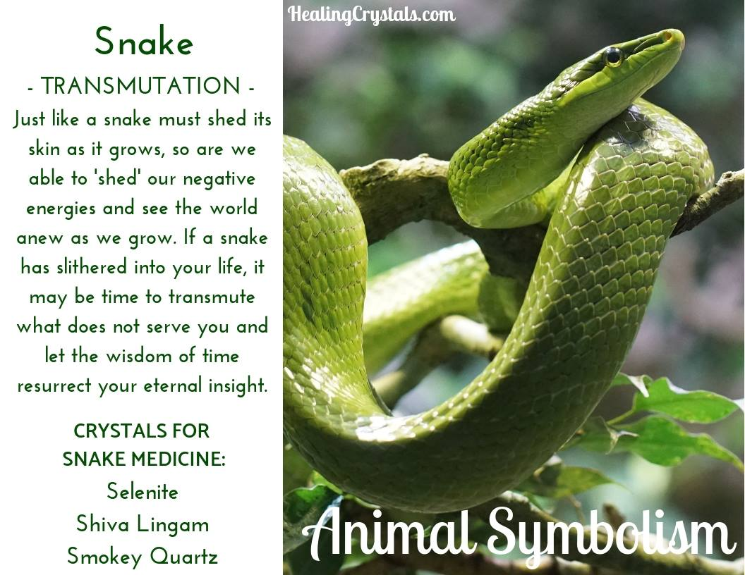 Animal Symbolism & Animal Totem Meanings for Snake