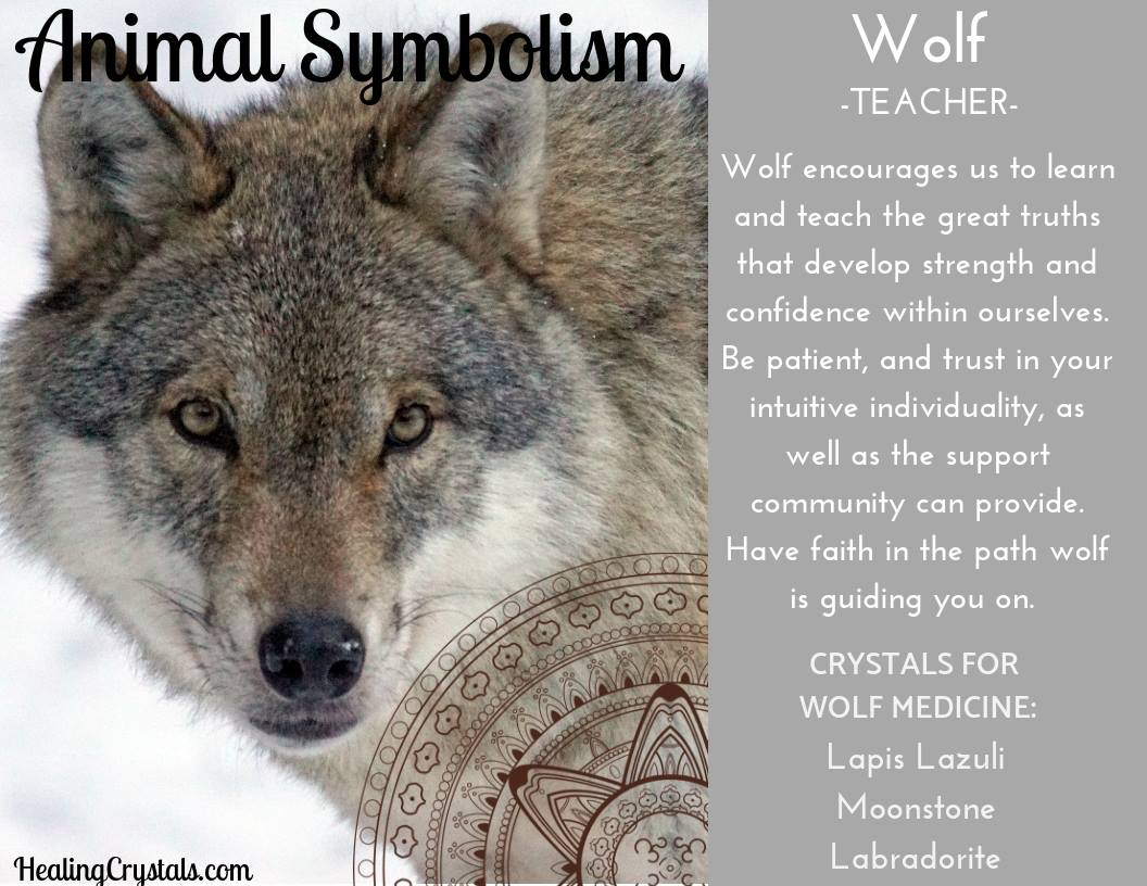 Animal Symbolism & Animal Totem Meanings for Wolf