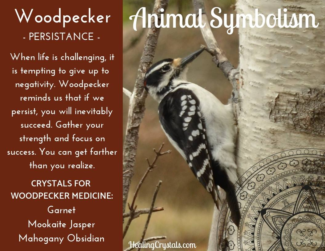 Animal Symbolism & Animal Totem Meanings for Woodpecker