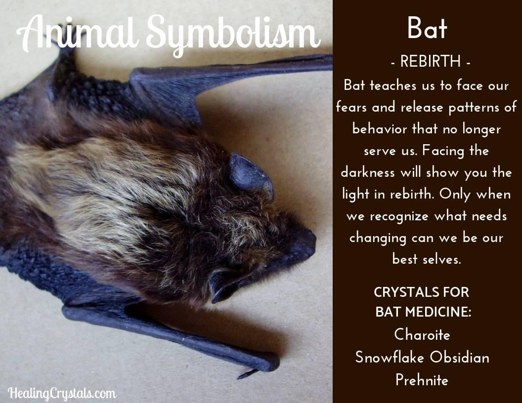Animal Totems - Animal Medicine Bat
