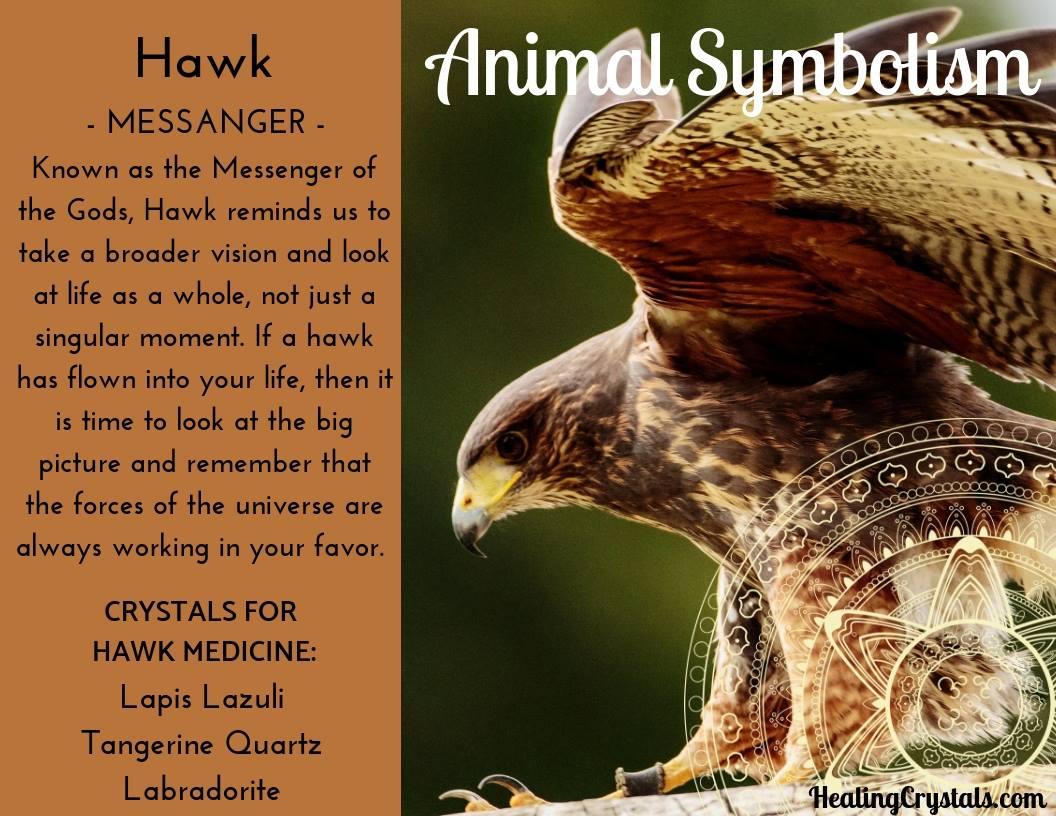 Animal Totems - Animal Medicine Hawk