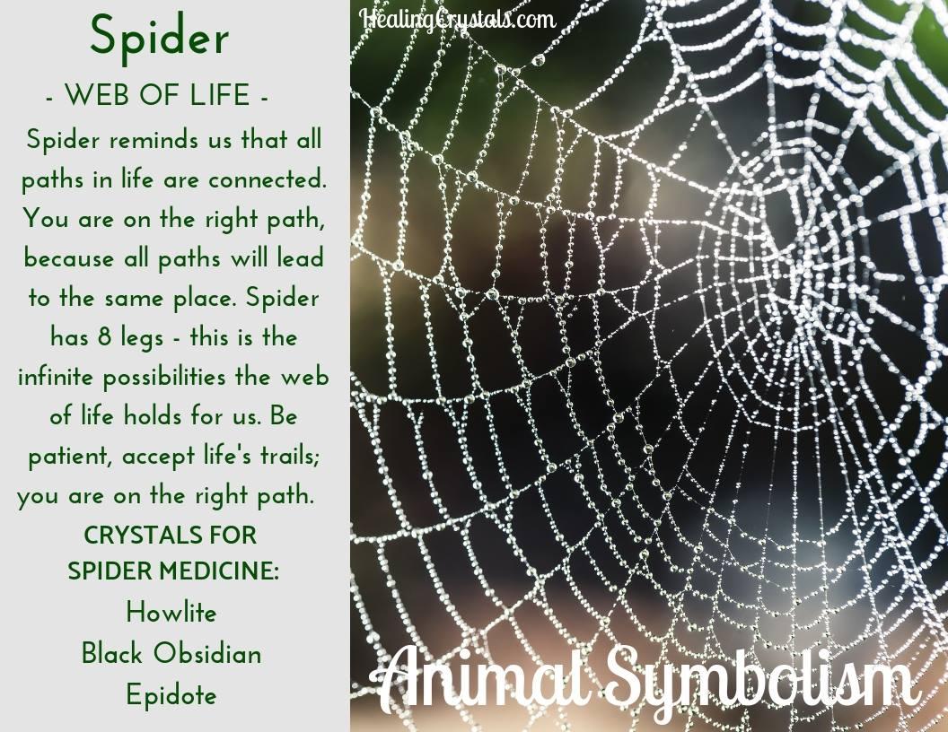 Animal Totems - Animal Medicine Spider