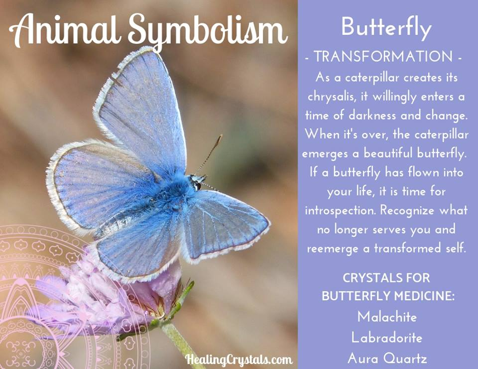 Animal Symbolism & Animal Totem Meanings for Butterfly