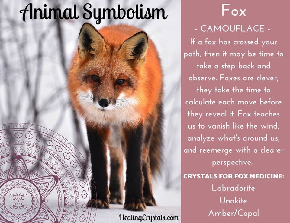Animal Symbolism & Animal Totem Meanings for Fox