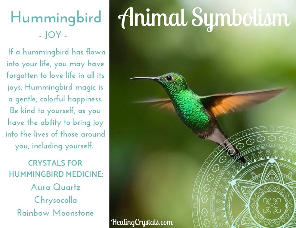Animal Symbolism & Animal Totem Meanings for Hummingbird