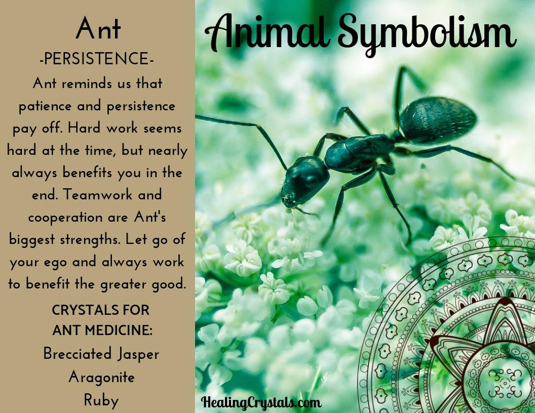 Animal Symbolism & Animal Totem Meanings for Ant