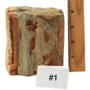 Petrified Wood - Fossilized Wood Specimen