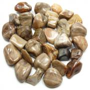 Tumbled Petrified Wood (Brazil) - Tumbled Stones