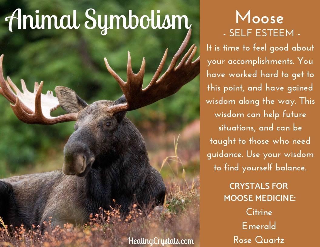 Animal Totems - Animal Medicine Moose